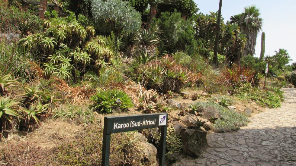 karoo-sudafrica-jardin