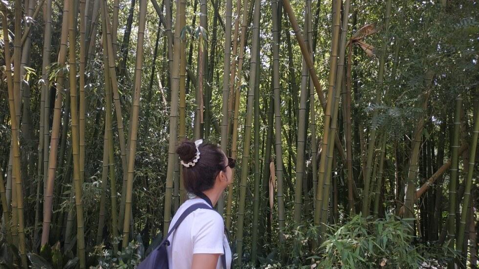 lunatouris-bambu-jardin