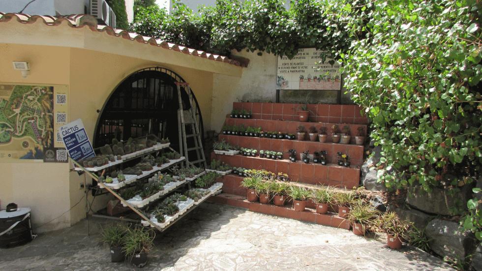 venta-cactus-jardin-blanes