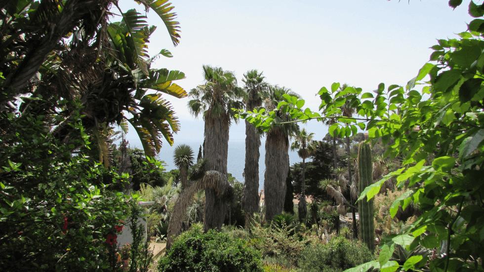 zona-cactus-vistas-mar